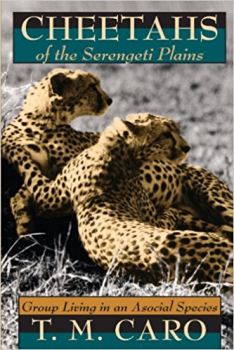 Cheetahs of the Serengeti Plains